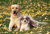 DOG 18 RK0015 21
