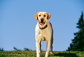 DOG 18 RK0048 01