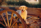 DOG 18 RK0050 09