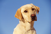 DOG 18 RK0052 15