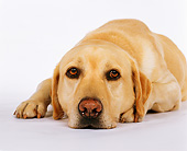 DOG 18 RK0060 03