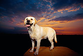 DOG 18 RK0093 01