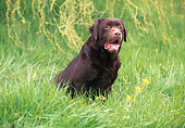 DOG 18 RK0123 02