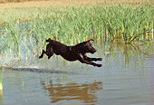 DOG 18 RK0177 03