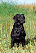 DOG 18 RK0179 08