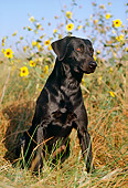 DOG 18 RK0181 06