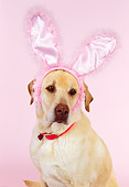 DOG 18 RK0189 03