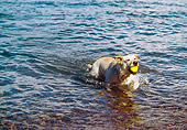 DOG 18 RK0201 03