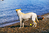 DOG 18 RK0204 01