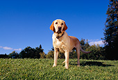 DOG 18 RK0214 01