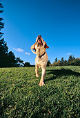 DOG 18 RK0216 08