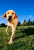 DOG 18 RK0216 10