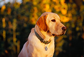 DOG 18 RK0217 02
