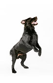 DOG 18 RK0267 01