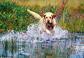 DOG 18 RK0323 06