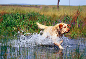 DOG 18 RK0323 27