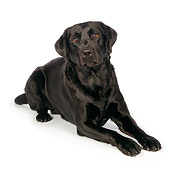 DOG 18 RK0347 01