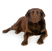 DOG 18 RK0348 01