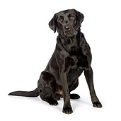 DOG 18 RK0362 01