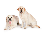 DOG 18 RK0369 01