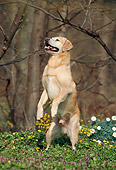 DOG 18 SS0001 01