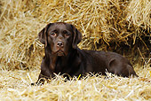 DOG 18 SS0008 01