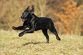 DOG 18 SS0010 01