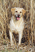 DOG 18 SS0012 01