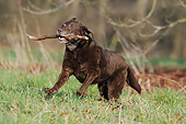DOG 18 SS0014 01