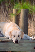 DOG 18 CE0002 01