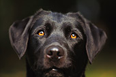 DOG 18 DB0001 01