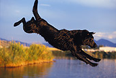 DOG 18 DB0007 01