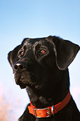 DOG 18 DB0009 01