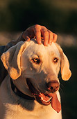DOG 18 DB0011 01