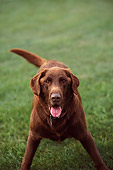 DOG 18 DB0028 01