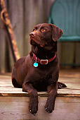 DOG 18 DB0030 01