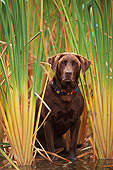 DOG 18 DB0031 01