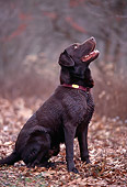 DOG 18 DB0034 01