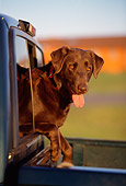 DOG 18 DB0044 01