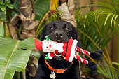 DOG 18 DB0048 01