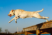 DOG 18 DB0052 01