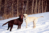 DOG 18 DB0054 01