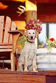 DOG 18 DB0056 01