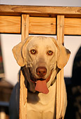 DOG 18 DB0063 01