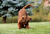 DOG 18 DB0065 01