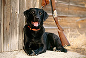 DOG 18 DB0076 01
