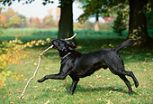 DOG 18 DB0077 01
