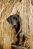 DOG 18 DB0078 01