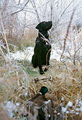 DOG 18 DB0079 01