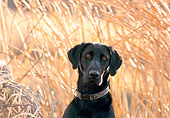 DOG 18 DB0083 01